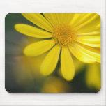 Pequeño cojín de ratón de la flor de la sol tapetes de ratón