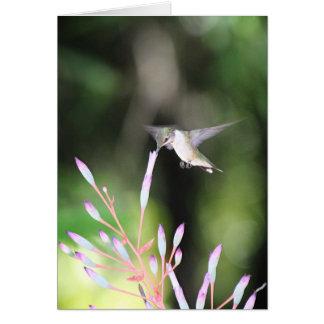 Pequeño colibrí bonito tarjeta de felicitación