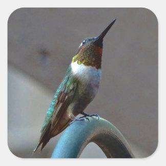 Pequeño colibrí de rubíes verde pegatina cuadrada