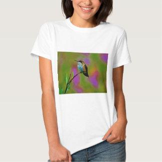 Pequeño colibrí gordo camisas