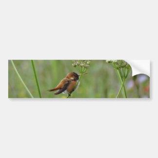 Pequeño colibrí lindo pegatina para auto