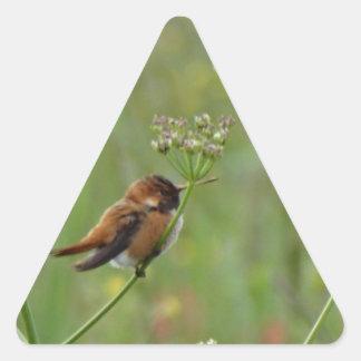 Pequeño colibrí lindo pegatina triangular