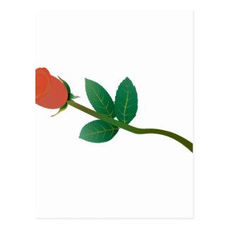 Pequeño color de rosa postales