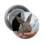 pequeño conejo dulce pin