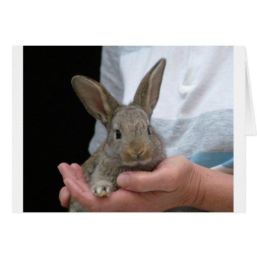 pequeño conejo dulce tarjeta
