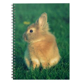 Pequeño conejo libro de apuntes con espiral