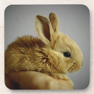 Pequeño conejo lindo a disposición posavasos