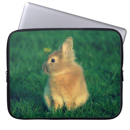 Pequeño conejo manga computadora