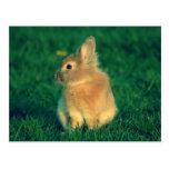 Pequeño conejo postal
