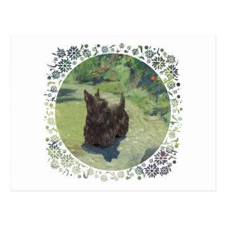 Pequeño escocés en el jardín postal