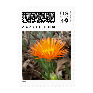 Pequeño franqueo del cactus floreciente anaranjado estampilla