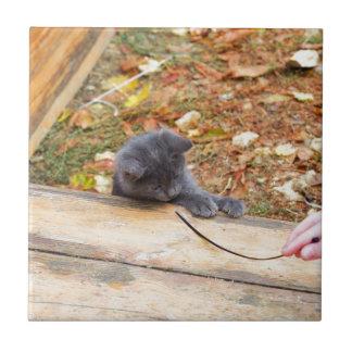 Pequeño gatito bonito dos jugado con un palillo azulejo cuadrado pequeño