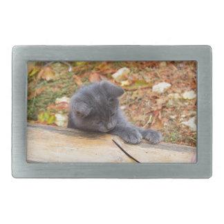 Pequeño gatito bonito dos jugado con un palillo hebilla de cinturón rectangular