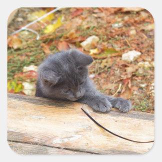Pequeño gatito bonito dos jugado con un palillo pegatina cuadrada