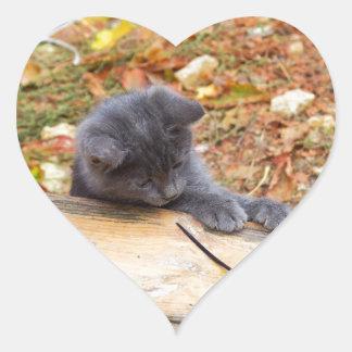 Pequeño gatito bonito dos jugado con un palillo pegatina en forma de corazón