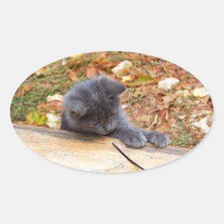 Pequeño gatito bonito dos jugado con un palillo pegatina ovalada