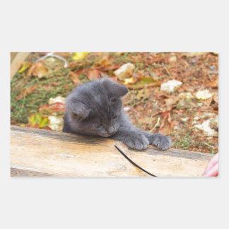 Pequeño gatito bonito dos jugado con un palillo pegatina rectangular