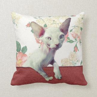 Pequeño gatito curioso del sphynx cojín