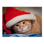 Pequeño gatito en gorra rojo del navidad postales