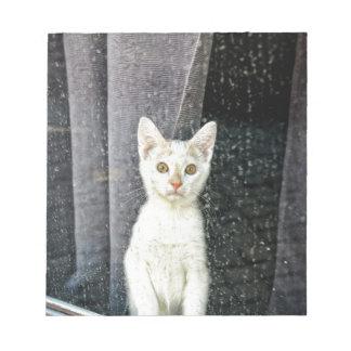 Pequeño gatito en la ventana blocs de papel