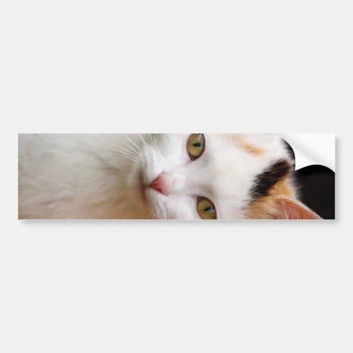 Pequeño gatito lindo pegatina para auto