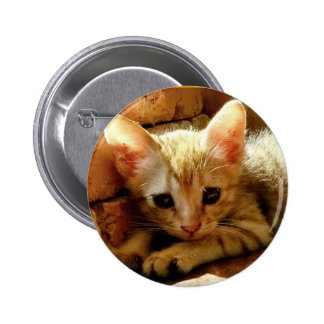 Pequeño gatito lindo pin redondo de 2 pulgadas
