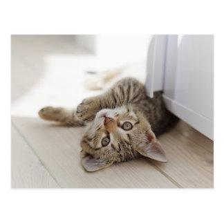 Pequeño gatito lindo tarjeta postal