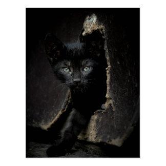 Pequeño gatito negro tarjeta postal
