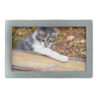 Pequeño gatito que juega en el parque del otoño hebilla cinturón rectangular