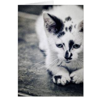 Pequeño gatito tarjeta de felicitación
