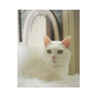 Pequeño gato blanco bonito impresión en lona