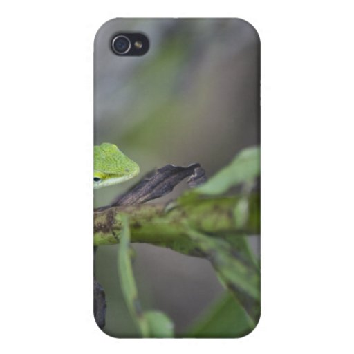 Pequeño Gecko iPhone 4 Carcasas