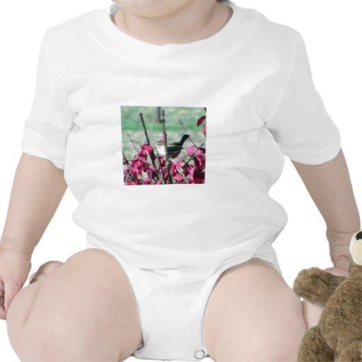 Pequeño gorrión lindo en los arbustos con las traje de bebé