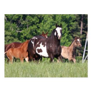 Pequeño grupo de caballos de diversos colores tarjeta postal