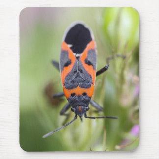 Pequeño insecto del Milkweed Alfombrillas De Raton