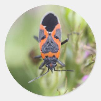 Pequeño insecto del Milkweed Pegatina Redonda