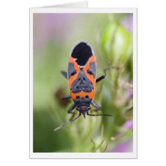 Pequeño insecto del Milkweed Tarjeta De Felicitación