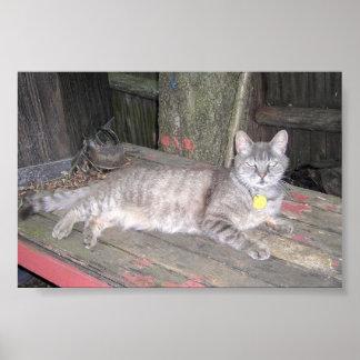 Pequeño Juan el gato Poster