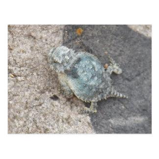 pequeño lagarto del sapo de cuernos postal