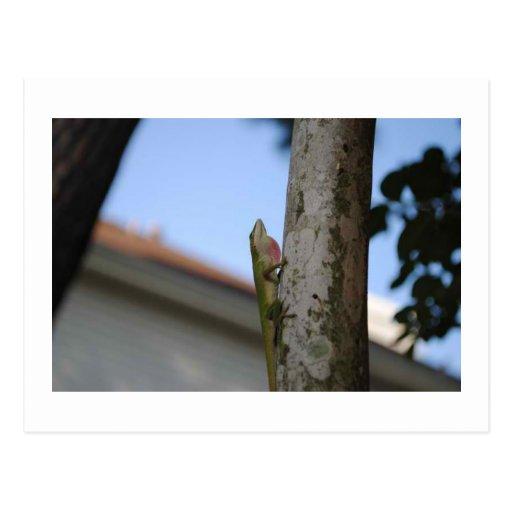 Pequeño lagarto postales