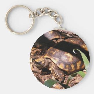 Pequeño llavero de las tortugas