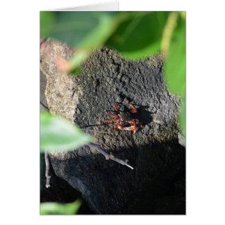 pequeño marco de la uva del mar del cangrejo en tarjeta de felicitación