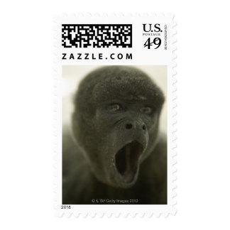 Pequeño mono gris, al aire libre, retrato franqueo