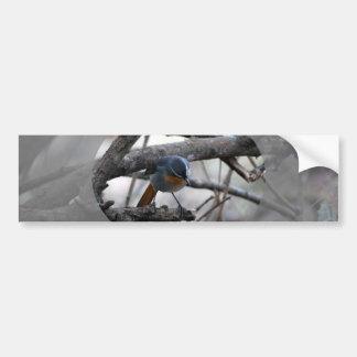 Pequeño pájaro del petirrojo pegatina para auto