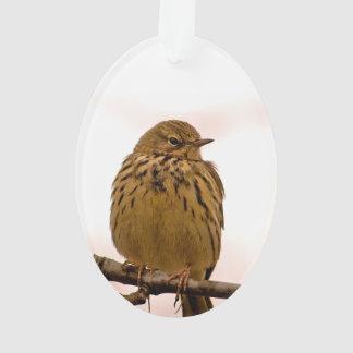 Pequeño pájaro en la foto de la rama de árbol