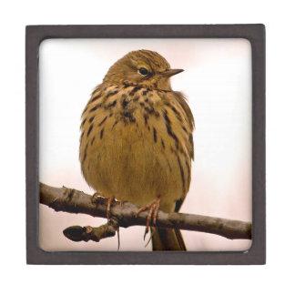 Pequeño pájaro en la foto de la rama de árbol cajas de joyas de calidad