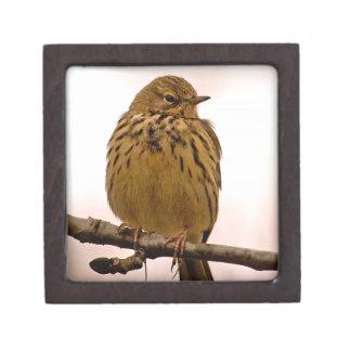Pequeño pájaro en la foto de la rama de árbol cajas de regalo de calidad