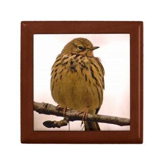 Pequeño pájaro en la foto de la rama de árbol cajas de recuerdo