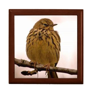 Pequeño pájaro en la foto de la rama de árbol caja de joyas