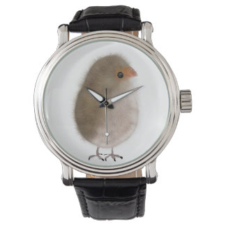 ¡Pequeño pájaro en un reloj! Relojes